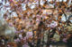 zdjęcia z rozmytym tłem